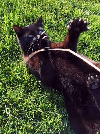 Animal Themes Close-up Day Domestic Animals Domestic Cat Feline Field Grass Green Color Growth Mammal Nature No People One Animal Outdoors Pets Relaxation
