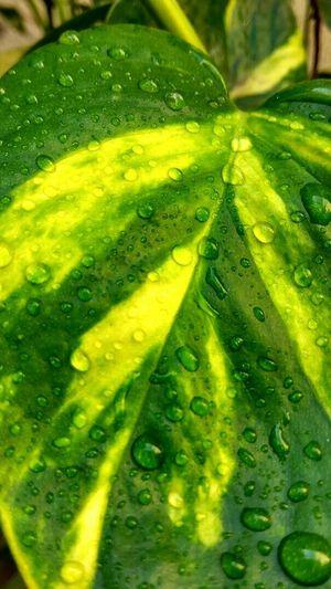 Green Color Freshness Drop Nature Close-up Morning Dew On Flower Leaf🍂
