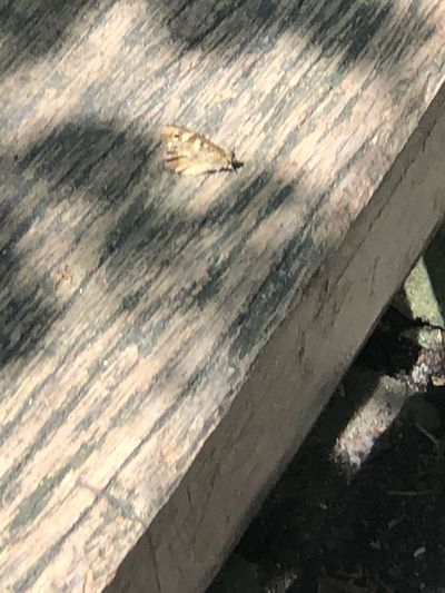 Butterfly 🦋 Butterfly💓 Eye😍 Wood - Material No People Day Sunlight Shadow Textured  High Angle View Outdoors Close-up Nature Pattern Animal Wood One Animal Animal Themes Animal Wildlife Weathered Boardwalk Footpath Old