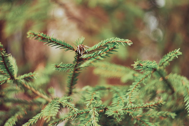 Branch Pinaceae Plant Part Wilderness Closing Tree Close-up Plant Sky Green Color