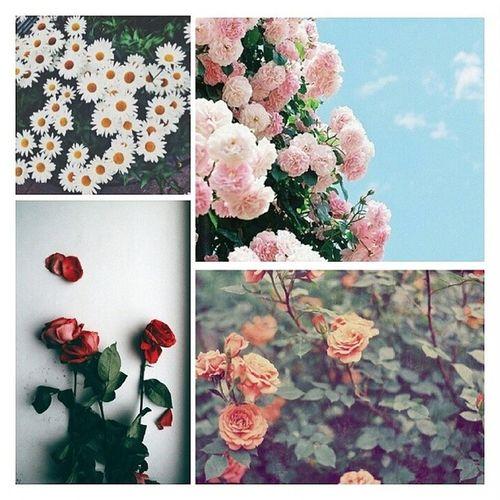 Hayırlı Sabahlar Çiçek gönüllü Çiçek insanlar ?? ?? Çünkü instagörl olmak bunu gerektirir.. ???? 4cicek