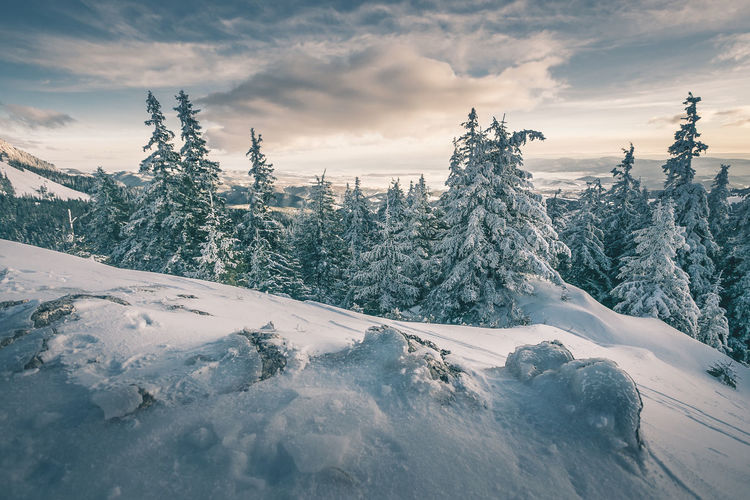 Beauty In Nature Cloud - Sky Cold Temperature Coniferous Tree Covering Day Environment Idyllic Mountain Nature No People Non-urban Scene Outdoors Plant Powder Snow Scenics - Nature Sky Snow Snowcapped Mountain Tranquil Scene Tranquility Tree Winter