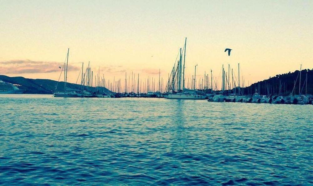 Home Taking Photos Enjoying Life Nature IPhoneography Sea Life Liguria,Italy Golfo Dei Poeti Sea And Sky