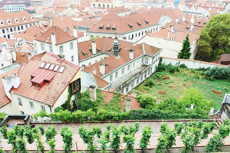 View from Prague Castle Architecture Outdoors Prague No People Backyard Praha Your Ticket To Europe EyeEmNewHere The Week On EyeEm