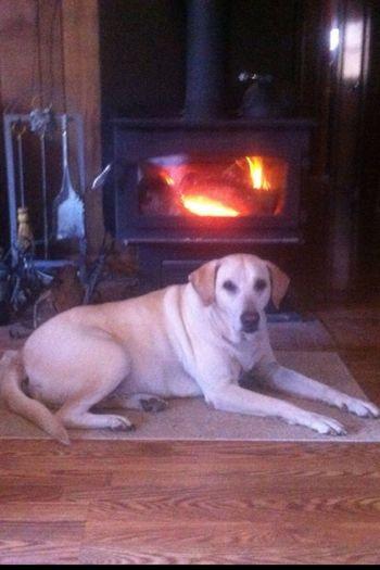Sammy-dog Chillin By The Fire!