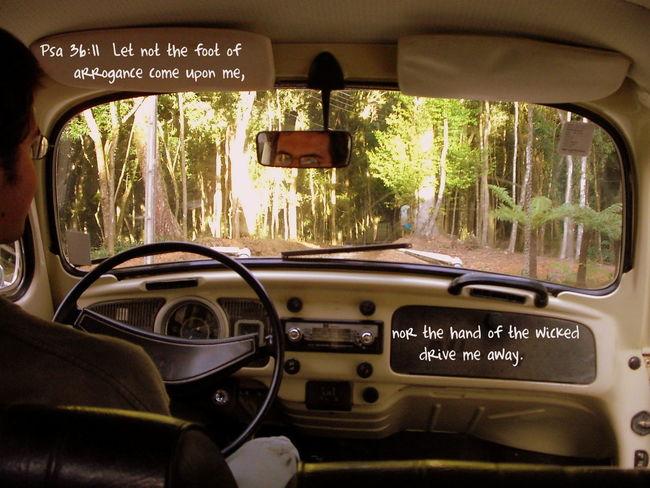 Car Car Interior Steering Wheel Fool  Arogance Driving Rainforest Old Car Oldtimer Bible