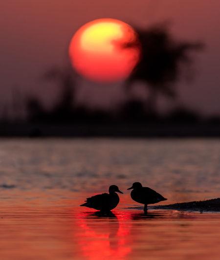 Black bird on shore against sea during sunset