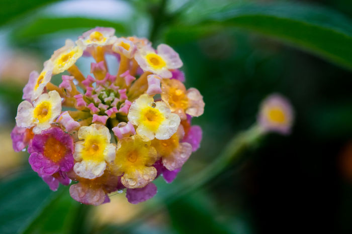 Flowers after rainy morning. Beautiful Beauty In Nature Close Up Nature EyeEm Best Shots - Flowers EyeEm Best Shots - Nature Flowers Flowers After Rain Nature Outdoors Purple Flower Purple Flower Close Up Selective Focus The Great Outdoors - 2016 EyeEm Awards Yellow Flower Nature's Diversities
