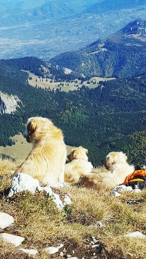 friends Dogs Golden Retriever Mountain Romania Brasov Sunny Peak Friendship Tranquil Scene Mountain Range Tranquility Calm