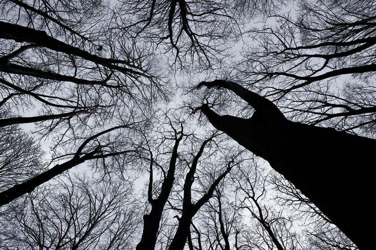 Sky Winter Forest Nature Winter Walk City EyeEmNewHere EyeEm Nature Lover Tree Branch Sky