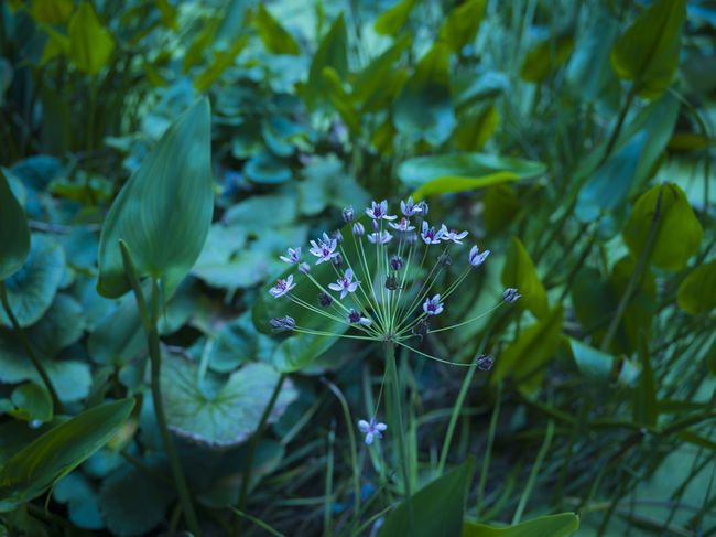 Beauty In Nature Blooming Close-up Day Flower Flower Head Fragility Freshness Green Color Growth Leaf Moody Moody Lights Nature No People Outdoors Petal Plant