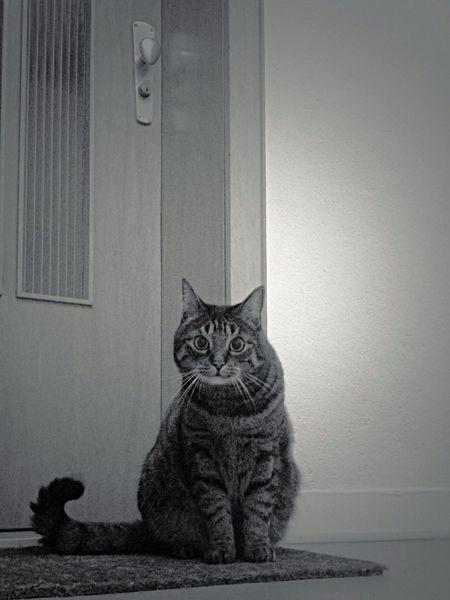 Who Are You ? Fortheloveofblackandwhite Tadaa Community EyeEm Best Shots Cats Pets Corner I Love My Cat