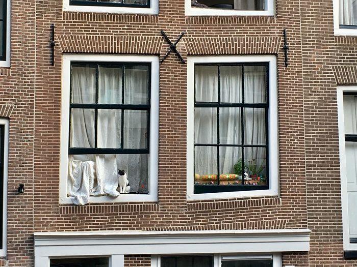 Full frame shot of cat window