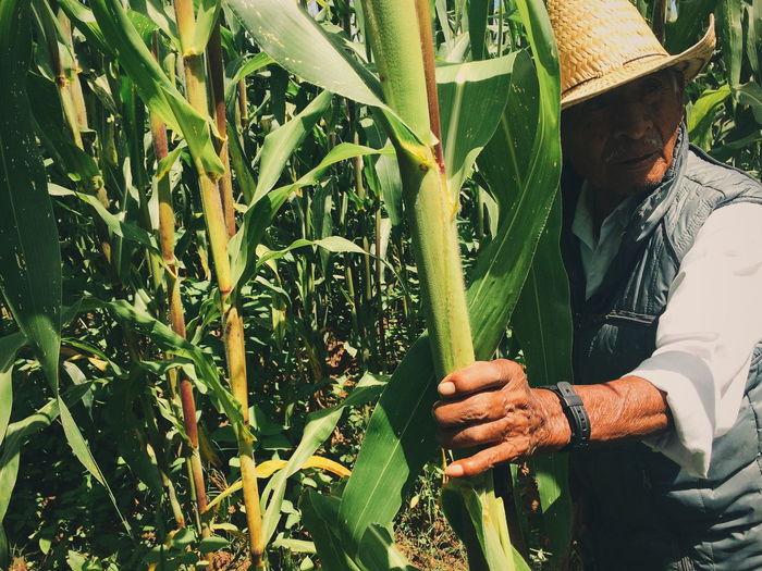 Man holding plants in field