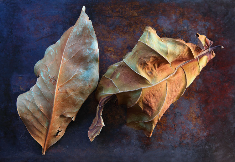 High angle view of dried leaves on table
