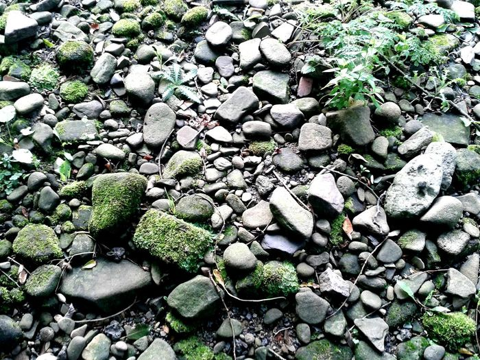 Nature On Your Doorstep Riverscape Sunlight And Shadow Walking Around Natural Beauty Autumn Colors Moss Riverbed Pebbles River Walk