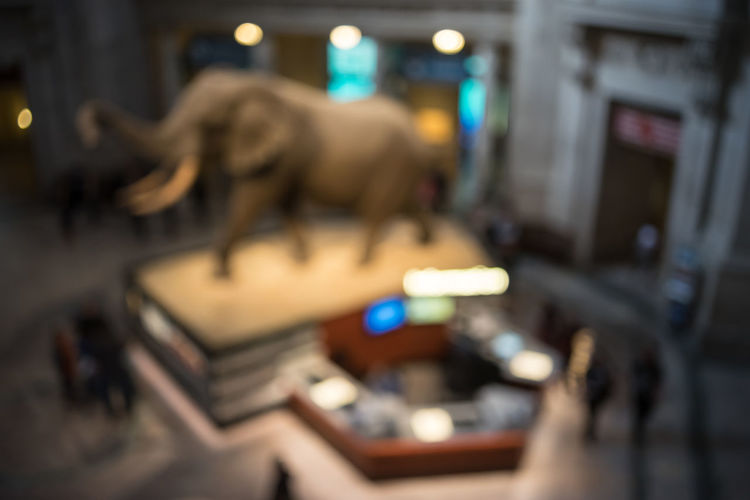Showing Imperfection Arts Culture And Entertainment Bones Close-up Colorful Depth Of Field Detail Elephant Evolution  History Lifestyles Mammel Multi Colored Museum Music Natural Natural History Museum Occupation Part Of Selective Focus Skull Smithonian Technology Washington Washington, D. C.