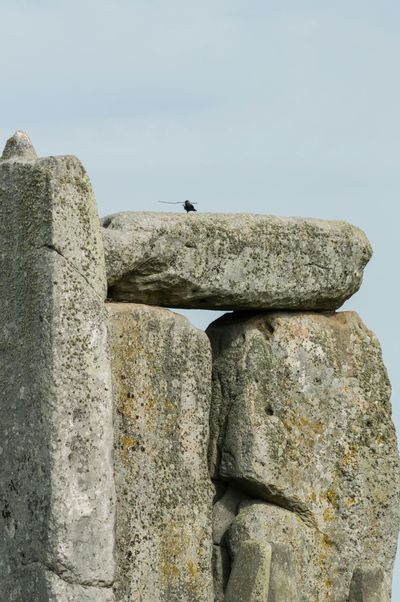 Not sure if this is strong enough to build my nest on! Landscape_Collection Amazing Place Architectural Detail EyeEm Birds Bird Nests Stones Stonehenge
