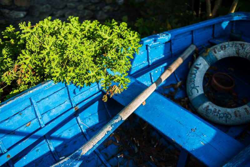 Dry Leaves Life Saver Oar Plant Porto Pidocchio (Liguria) Travel Abandoned Adventure Blue Boat Bunch Close-up Day Floating Ring Geranium Leaves Nature No People Outdoors Paddle Punta Chiappa Tree