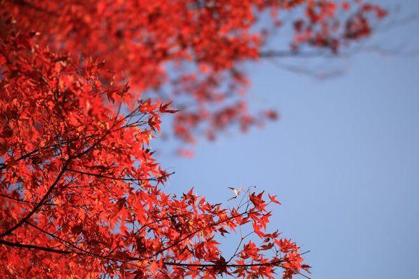 Check This Out Fukui Japanese  Canon 紅葉 Tamron Lens Macro Instagram