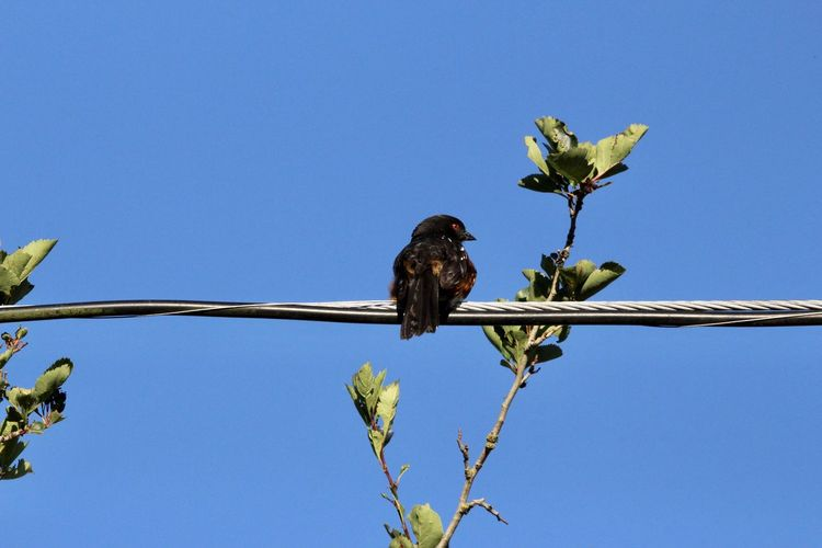 Low angle view of bird perching on plant against blue sky