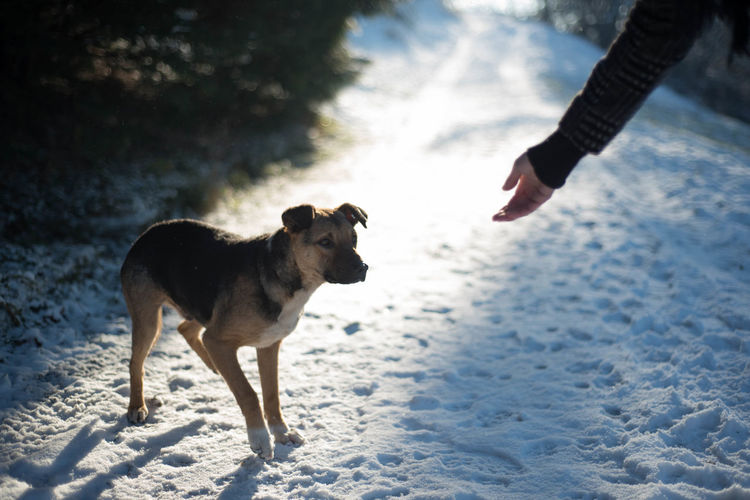 Adult Adults Only Animal Themes Cold Temperature Day Dog Domestic Animals Human Body Part Human Hand Nature Only Men Outdoors People Pets Sky Snow Togetherness Winter