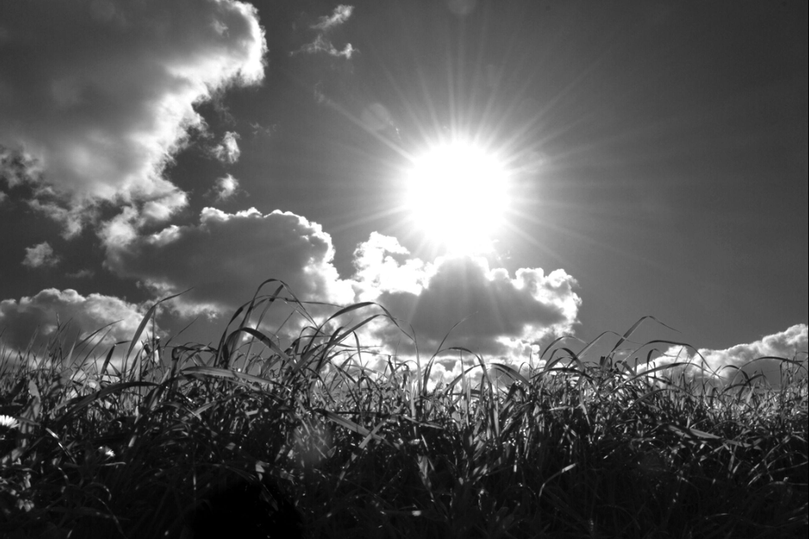 sun, sky, field, grass, sunbeam, sunlight, plant, nature, lens flare, landscape, cloud - sky, tranquility, beauty in nature, growth, rural scene, tranquil scene, scenics, cloud, sunny, day