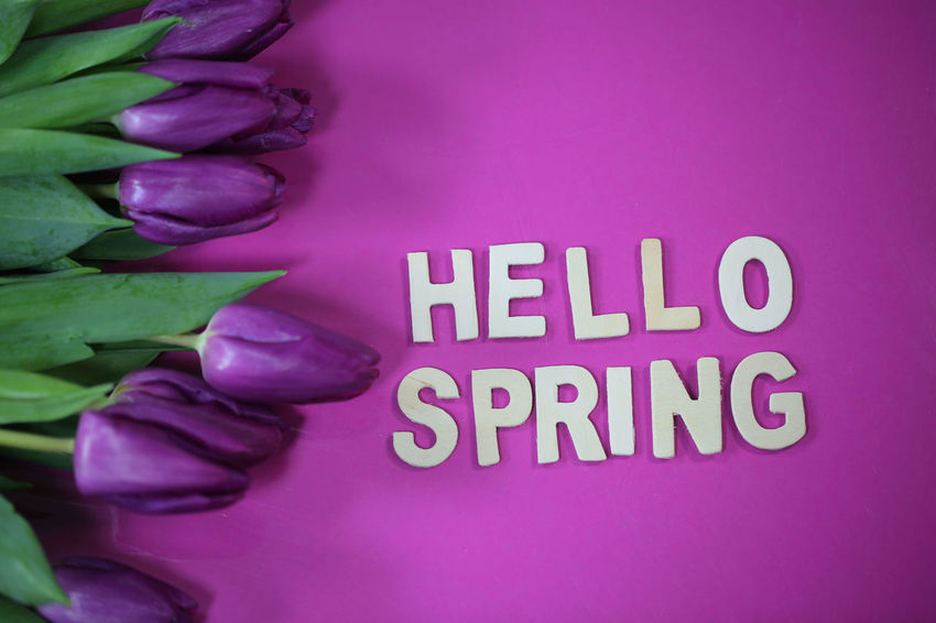 Text Western Script Pink Color Communication Close-up Purple Human Body Part One Person Indoors  Capital Letter Freshness Real People Plant Flower Green Color Message Body Part Information Hello Spring