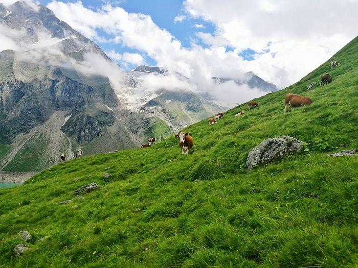 Idyllic rural scene from austria