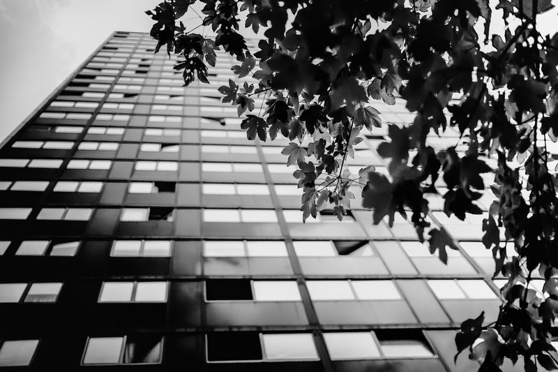Low angle view of tree against building