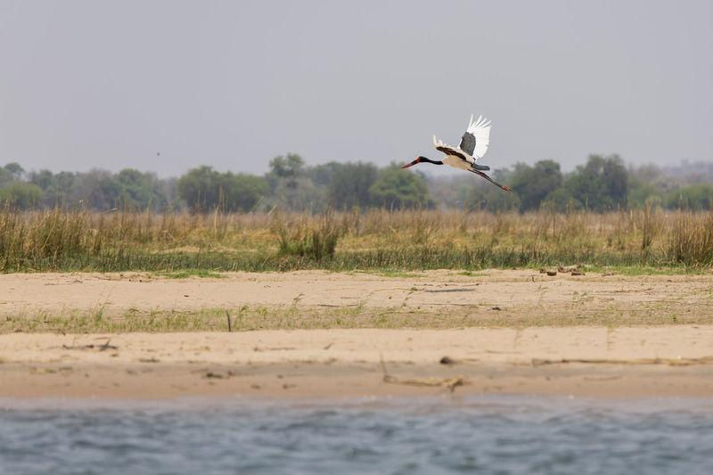 Crane flying over a land
