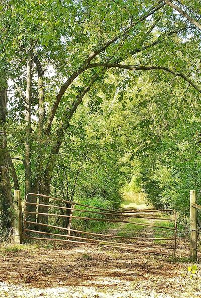 Fence Metal Fence Bent Fence Gate Old Gate Bent Gate Gateway Opening Closing Pasture Tree Lined Road Overgrowth Overgrown Country Keep Out Meadow Growth Non-urban Scene Remote Messy Beauty In Nature Tranquil Scene Tranquility Outdoors Tree
