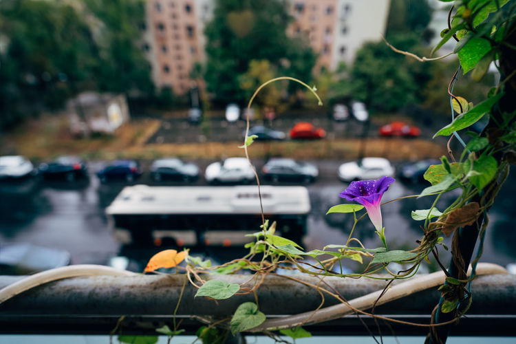 Close-up of flowering plant by car on city street on a rainy day