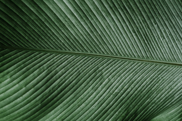 Green Light Nature Abstract Background Backgrounds Beauty In Nature Close-up Earthtone Full Frame Green Color Leaf Leaves Nature No People Outdoors Palm Leaf Palm Tree Pattern Plant Part Shadow Striped Texture Textured  Vintage