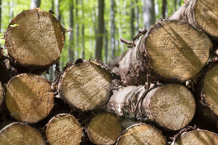 tree trunks Green Tree Tree Log Tree Trunk Beech Wood Close-up Day Fors Lush Foliage No People Tree Area Tree_collection