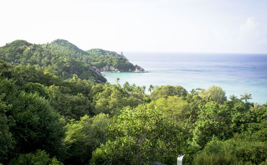 Copy Space Drone  Evergreen Happy Island Koh Tao,Tao Island,Southern Thailand Nature Plant Tropical Climant First Eyeem Photo