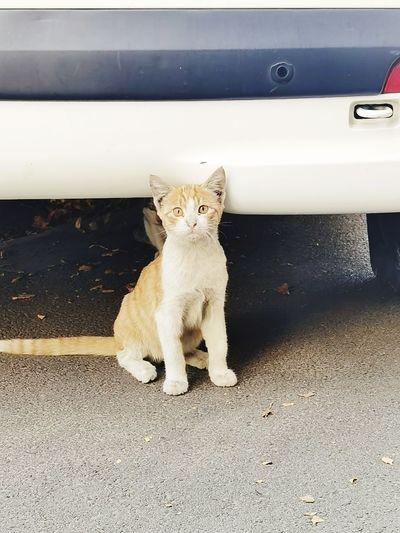 Portrait of cat sitting on a car