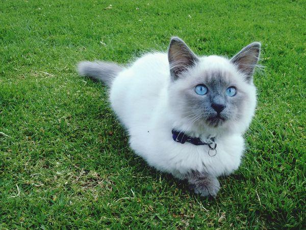 Gato😽 Cats 🐱 Gato Cat Photography Gatito Photography Pet Photography  Cat Facatativa