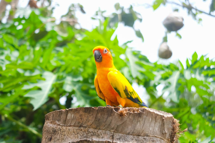 Close-up of parrot perching on wooden post