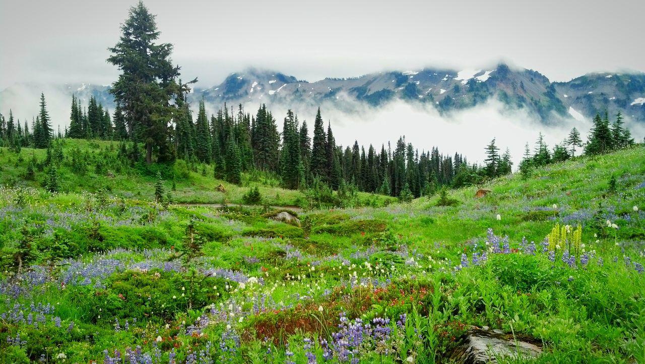 Green landscape against mountains