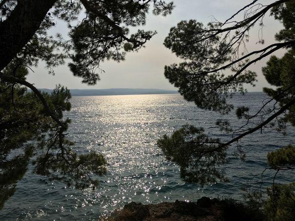 Tree Nature Water Sea Beauty In Nature Tranquility Scenics Sky No People Beach Outdoors Day Brela  Croatia Island Horizon Over Water Beauty In Nature No Filter Dalmatia Emotional
