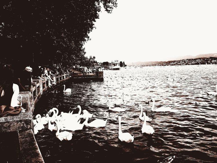 Zürich My City Zürichsee Love Nature❤ Freshness Day