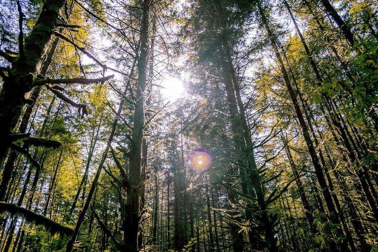 Washington State Pacific Northwest  Livewashington Evergreen State