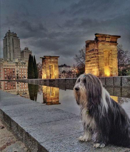 Mai en el Templo De Debod Clouds And Sky Dogs