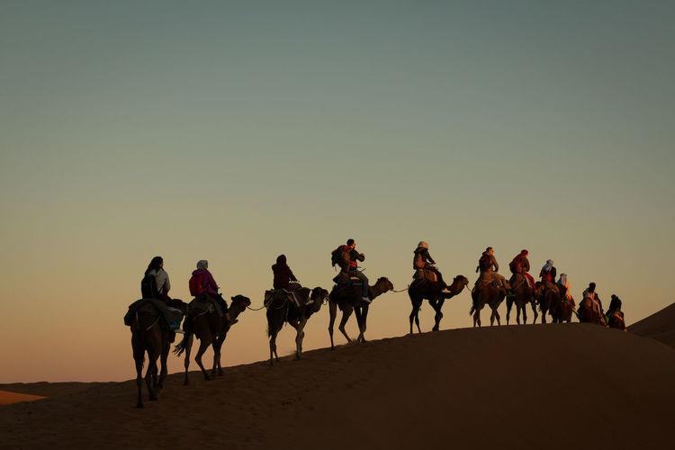 camel trek into