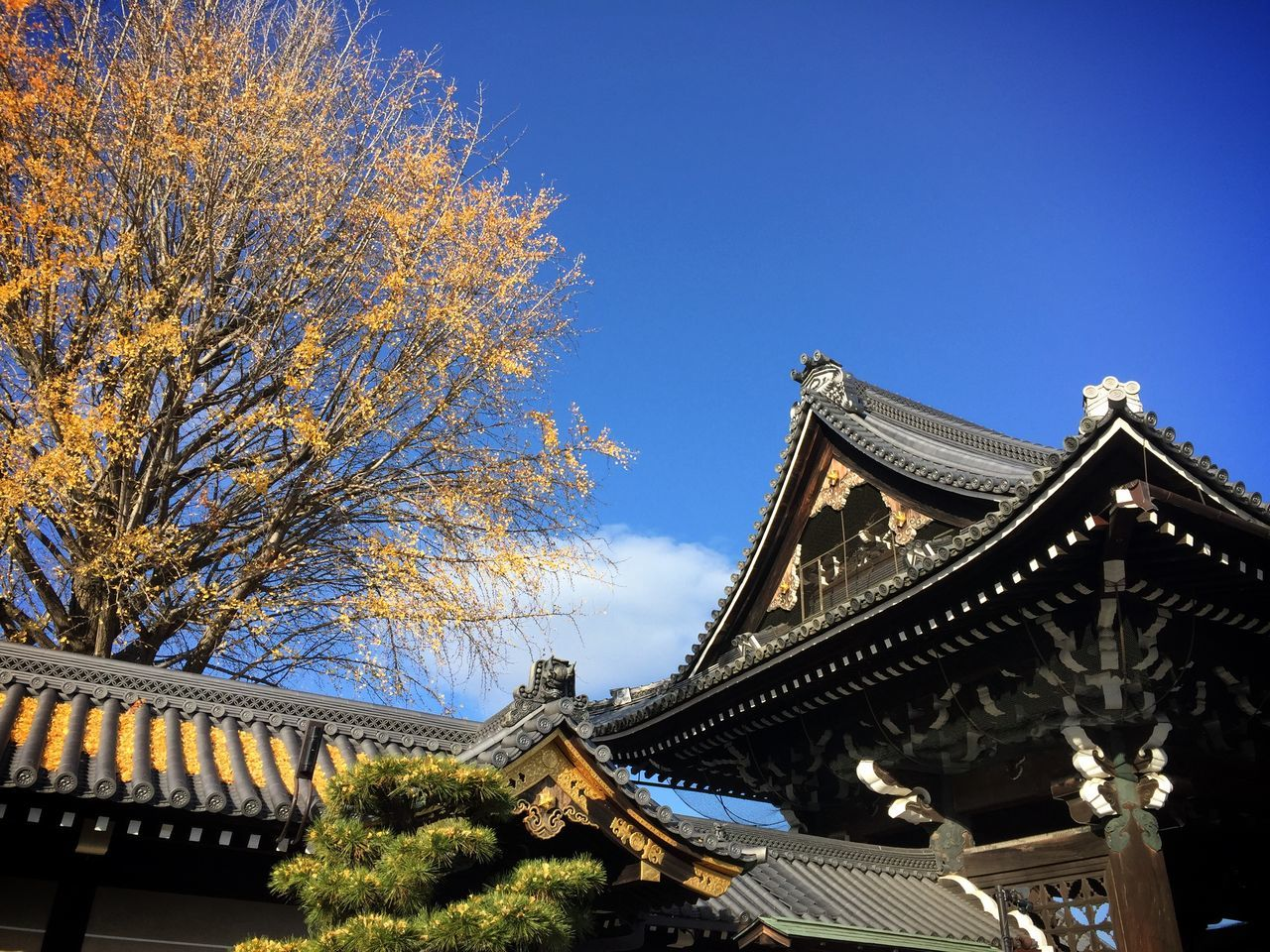 Low Angle View Of Nishi Honganji Temple Against Blue Sky
