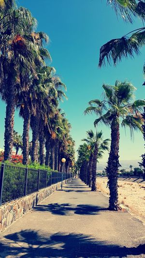 Palm way in a