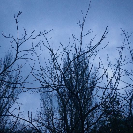 Sky Bare Tree No People Tree Branch Nature Beauty In Nature Evening IPhoneography Iphonephotography IPhone Photography Iphone5s