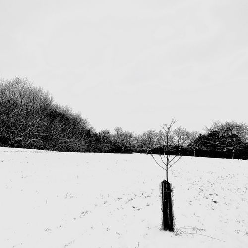 Snow Cold Temperature Winter Nature Tree Weather Field Tranquil Scene Beauty In Nature Bare Tree Clear Sky Day No People Outdoors Covering Frozen Landscape Scenics Cold