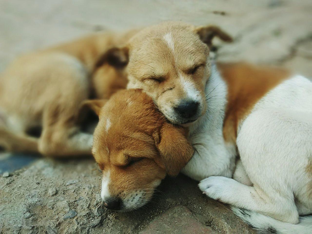 Close-Up Of Puppies Sleeping On Field